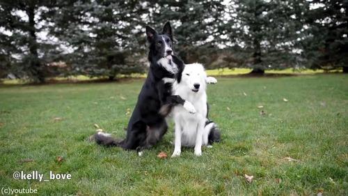 写真写りを気にする犬たち01