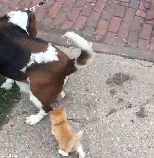 犬の散歩をしていたら迷子の子猫がついてきた05