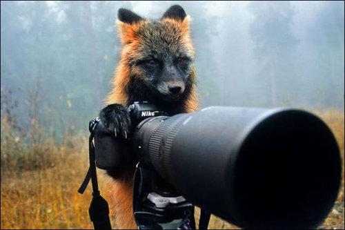 カメラマンな動物20