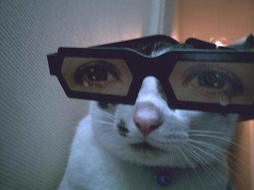 メガネ猫24