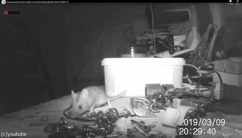ネズミが工具を片づけてくれる01
