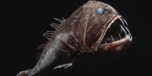 深海の生き物06