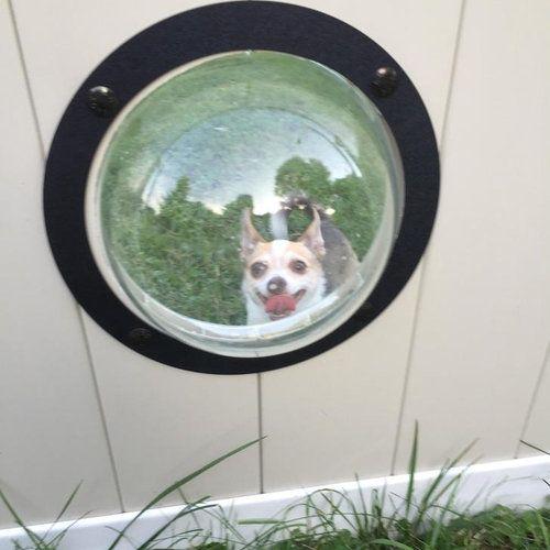 犬のためにフェンスに小窓08