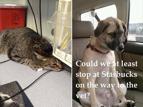 犬や猫を獣医に連れて行くと13