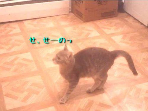 残念なジャンプ猫