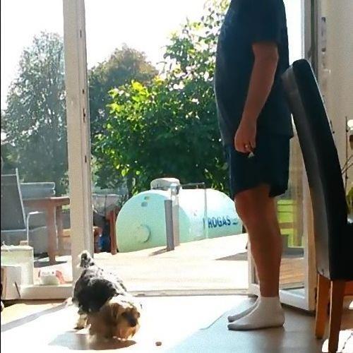 窓が無くても入って来ない犬04