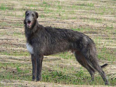 犬の成長08