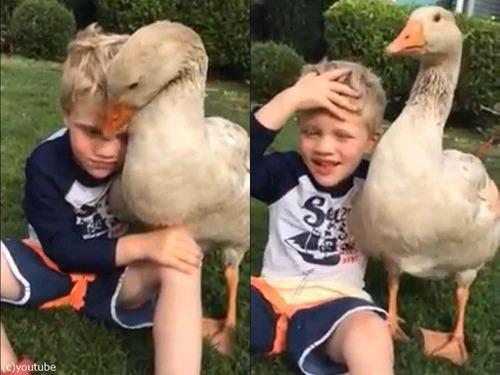 少年とペットのガチョウ00