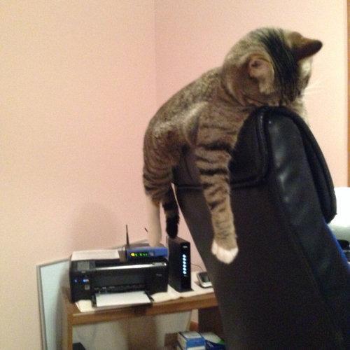 バランス猫03