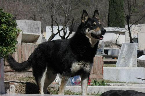 忠犬キャピタン02