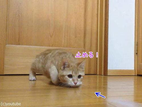 猫ゴールキーパー00