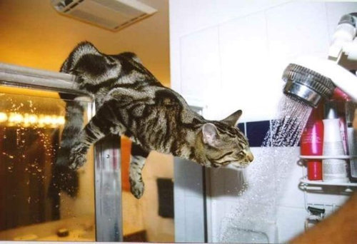 チャレンジャーな猫14