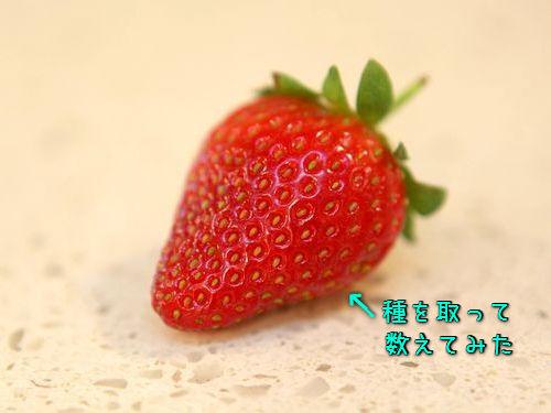 このイチゴには204粒の種があった00