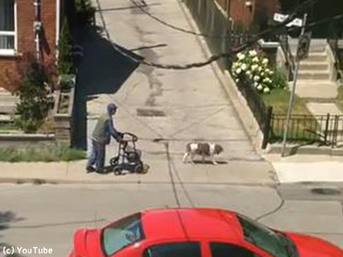 老人と散歩する犬00