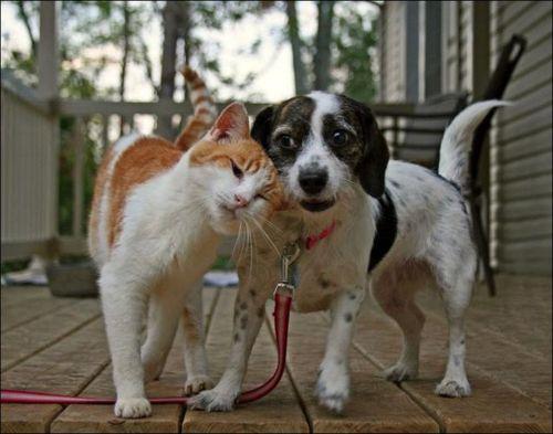 愛情いっぱいの動物17