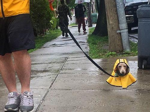 犬のレインコート04