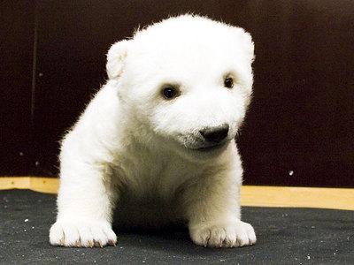 白クマの子供がかわいすぎる15