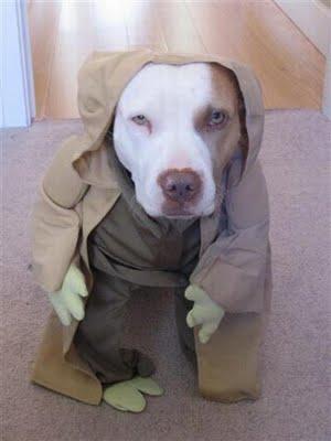 スターウォーズな犬09