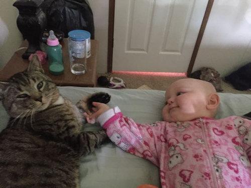 妊娠中に拾った猫が、今は赤ちゃんと親友に02
