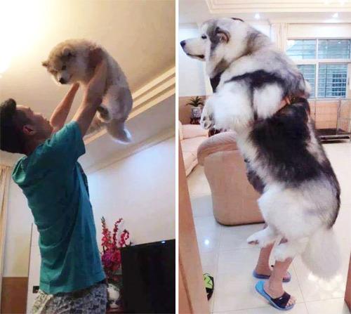 ペットの成長13