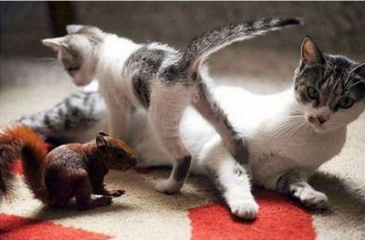 リスと猫06
