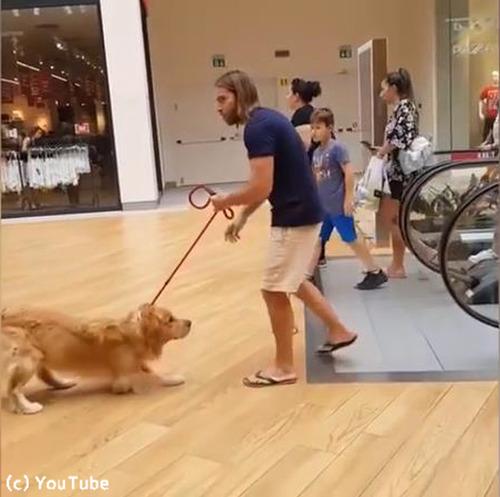 エスカレーターが怖い犬03