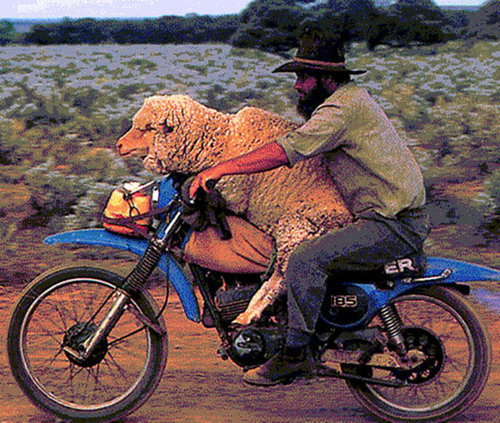 バイクで物を運ぶ限界12