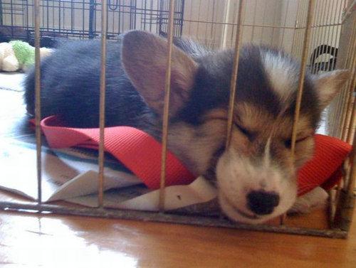 12すやすや寝る動物