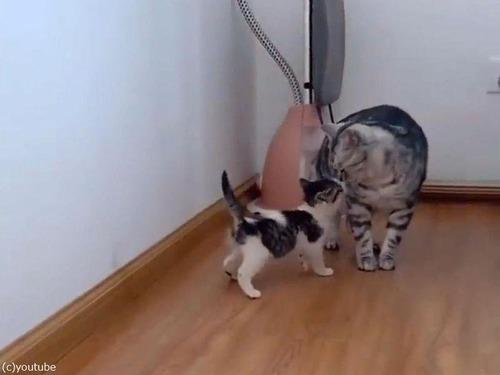 犬と猫、子猫と出会う03