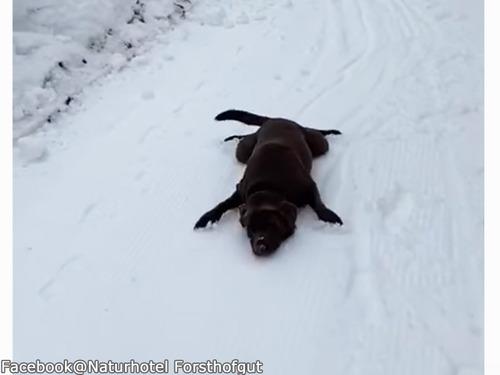 犬「そりは必要ないワン!」00