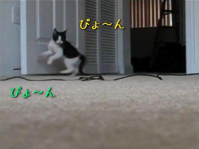 部屋に入る子猫