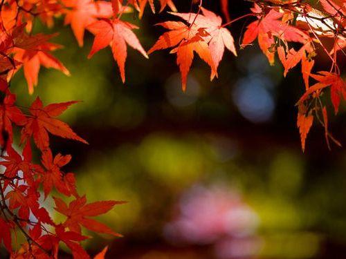 京都のレッドカーペット00