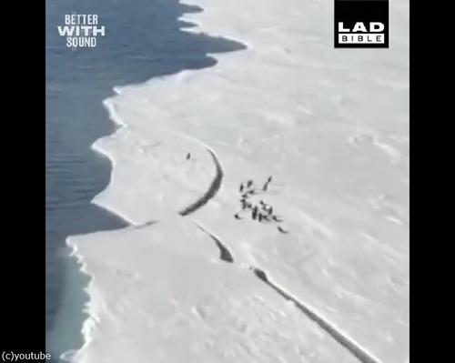 危うく群れからはぐれるペンギン…ハラハラする動画02