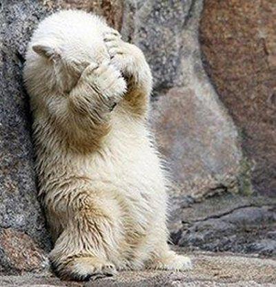 クマが釣られたり戦ったりあられもない格好したりする画像18