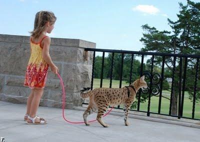 世界一背の高い猫06