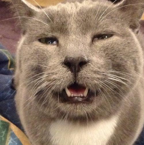 くしゃみ直前の猫12