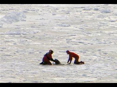 イルカの救出
