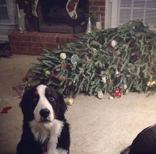 クリスマスとペット18