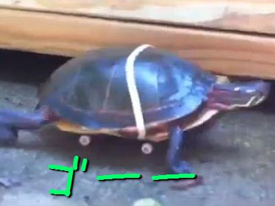 スケボー亀