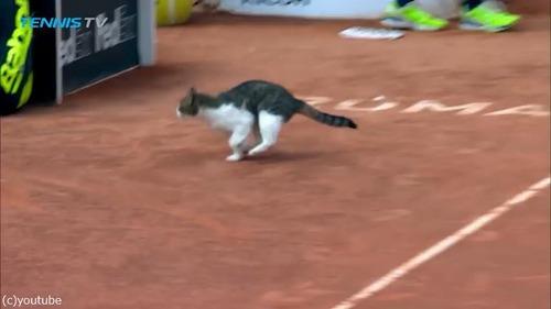 テニスの試合に猫が乱入03