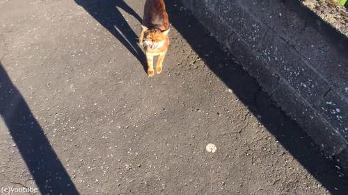 飼い主が帰宅したときの猫02