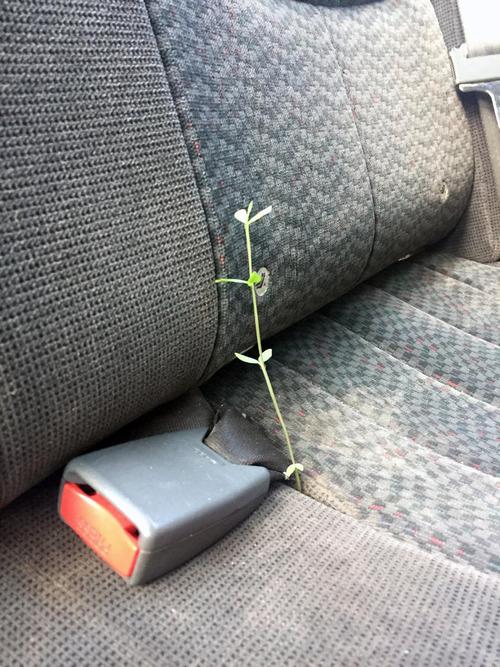 04生命力を感じる植物や木