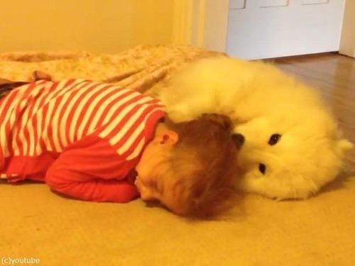 女の子とサモエドの子犬03