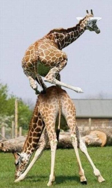 動物の友情10