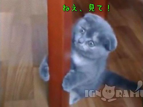 ぴょんぴょん跳ねる子猫00