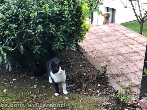 庭に入れさせない猫vs入りたい犬03