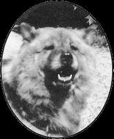世界を変えた10匹の犬-ジョフィ