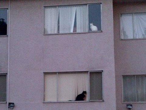 猫が「スパイvsスパイ」05