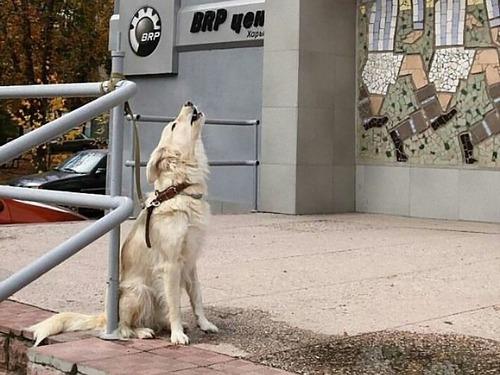 飼い主を待つ犬たち10