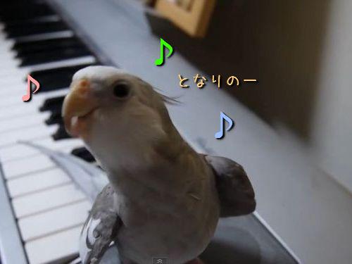 「となりのトトロ」を歌うインコ00
